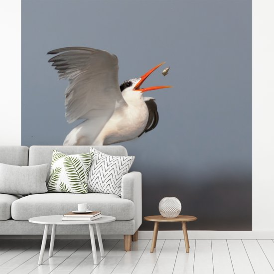 Fotobehang vinyl - Een Californische kuifstern vangt zijn voedsel breedte 450 cm x hoogte 450 cm - Foto print op behang (in 7 formaten beschikbaar)