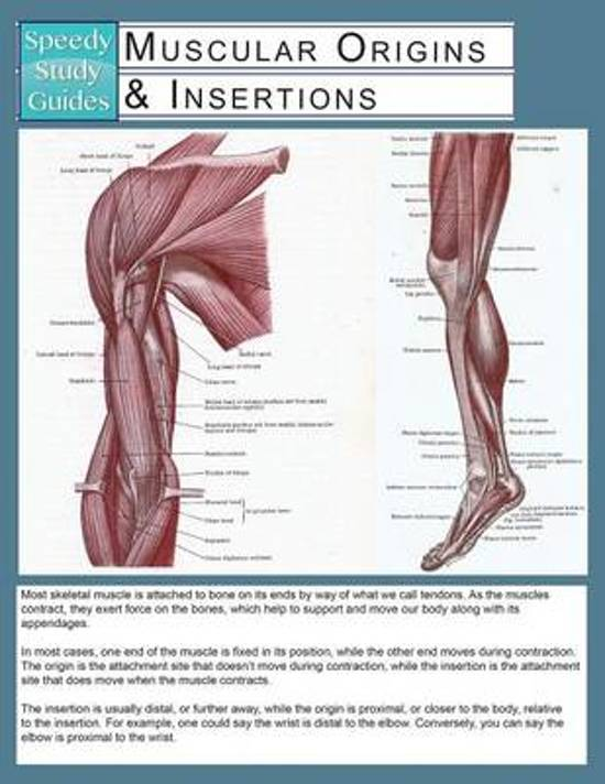 joints ligaments speedy study guides speedy publishing