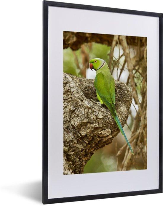 Foto in lijst - De prachtige groene vacht van een grote alexanderparkiet die op een tak zit fotolijst zwart met witte passe-partout 40x60 cm - Poster in lijst (Wanddecoratie woonkamer / slaapkamer)