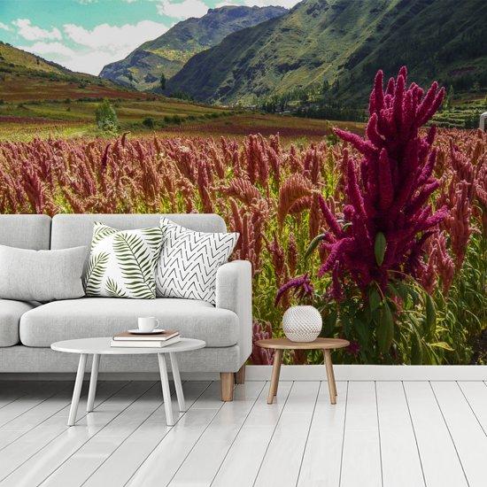Fotobehang vinyl - Kleurrijk veld met het rode quinoa in een groen dal breedte 350 cm x hoogte 260 cm - Foto print op behang (in 7 formaten beschikbaar)