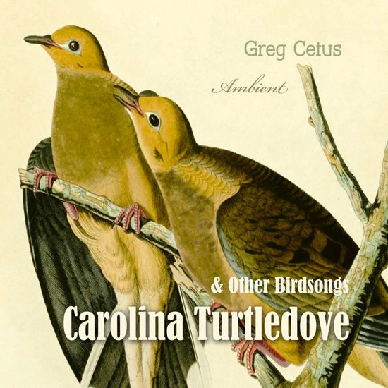 Carolina Turtledove and Other Birdsongs