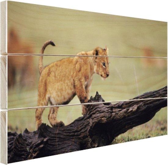 Jong leeuwtje in Kenia Hout 120x80 cm - Foto print op Hout (Wanddecoratie)