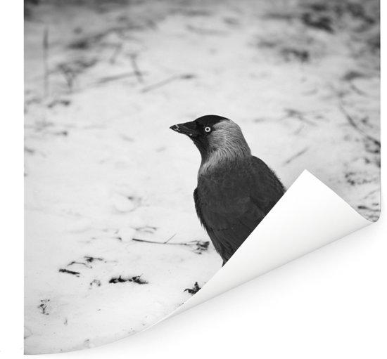 Een kauw in de sneeuw tijdens de winter Poster 100x100 cm - Foto print op Poster (wanddecoratie woonkamer / slaapkamer)
