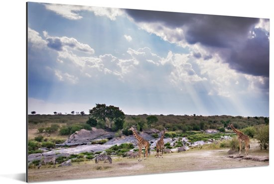 Zonnestralen boven het Masai Mara National Park in Kenia Aluminium 60x40 cm - Foto print op Aluminium (metaal wanddecoratie)