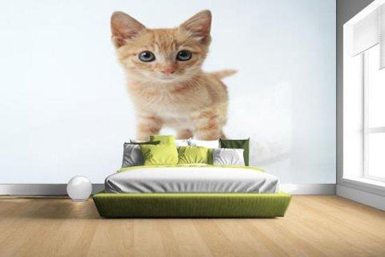 FotoCadeau.nl - Klein rood katje Fotobehang 380x265