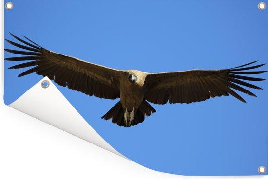 Een Andescondor met gespreide vleugels Tuinposter 180x120 cm - Tuindoek / Buitencanvas / Schilderijen voor buiten (tuin decoratie) XXL / Groot formaat!