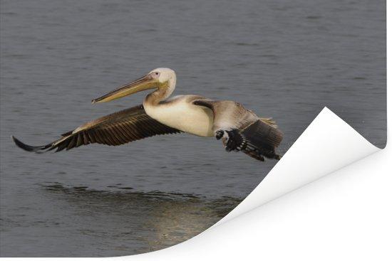 Jonge Roze pelikaan vliegt uit het water Poster 180x120 cm - Foto print op Poster (wanddecoratie woonkamer / slaapkamer) XXL / Groot formaat!