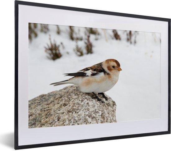 Foto in lijst - Een sneeuwgors op een steen in de sneeuw fotolijst zwart met witte passe-partout klein 40x30 cm - Poster in lijst (Wanddecoratie woonkamer / slaapkamer)