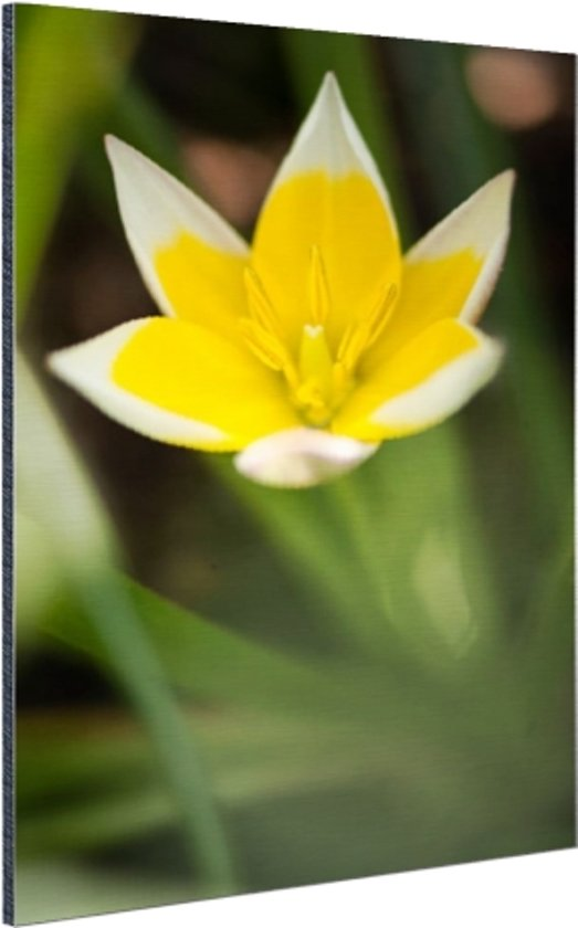 Gele bloem Aluminium 60x90 cm - Foto print op Aluminium (metaal wanddecoratie)