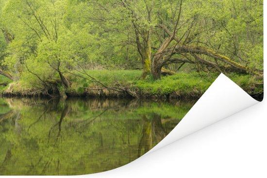 De Thaya rivier en bossen in het Nationaal Park Thayatal in Oostenrijk Poster 120x80 cm - Foto print op Poster (wanddecoratie woonkamer / slaapkamer)