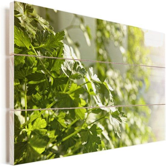 Peterselie bloeiend in het zonlicht Vurenhout met planken 90x60 cm - Foto print op Hout (Wanddecoratie)