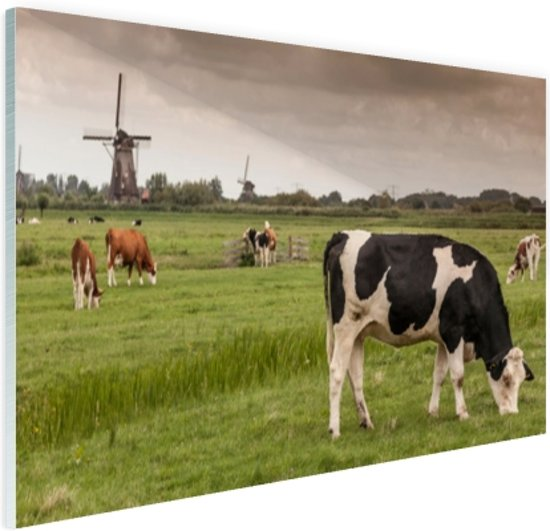FotoCadeau.nl - Grazende koeien op een dijk Glas 90x60 cm - Foto print op Glas (Plexiglas wanddecoratie)