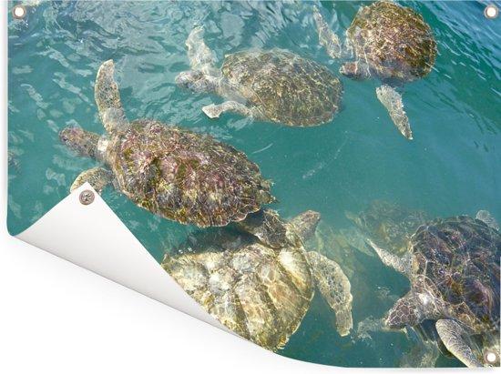 Schildpadden die samen in het helderblauwe water bij Grand Cayman zwemmen Tuinposter 160x120 cm - Tuindoek / Buitencanvas / Schilderijen voor buiten (tuin decoratie) XXL / Groot formaat!