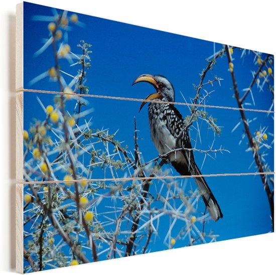 Geel gefactureerde neushoornvogel zit in een blauwe hemel Vurenhout met planken 60x40 cm - Foto print op Hout (Wanddecoratie)
