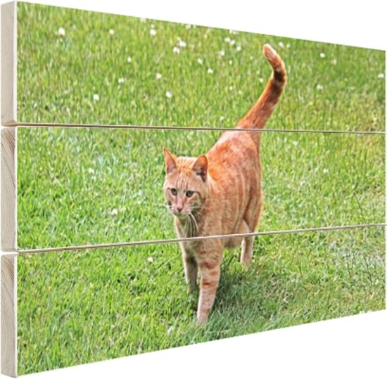 Rode kater in het gras Hout 80x60 cm - Foto print op Hout (Wanddecoratie)