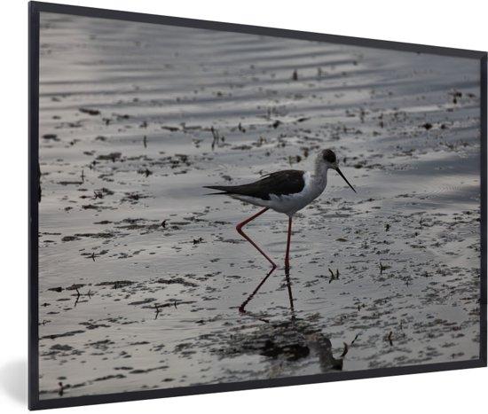 Foto in lijst - Zwarte gevleugelde Kluut in het water fotolijst zwart 60x40 cm - Poster in lijst (Wanddecoratie woonkamer / slaapkamer)