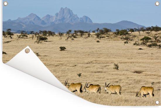 Mount Kenya met kudde elanden op de voorgrond in Afrika Tuinposter 180x120 cm - Tuindoek / Buitencanvas / Schilderijen voor buiten (tuin decoratie) XXL / Groot formaat!