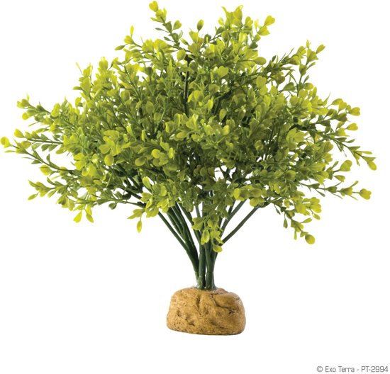 Exo Terra Rainforest Plant Boxwood Bush per stuk
