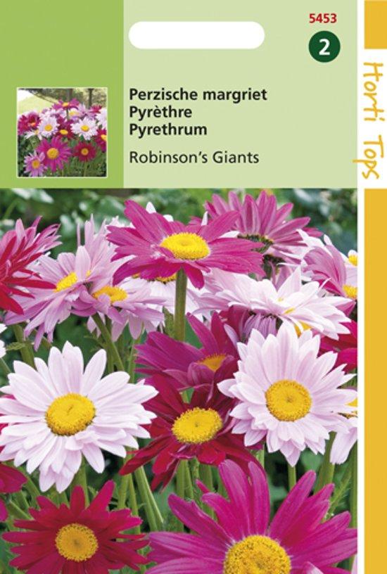 Hortitops Zaden - Perzische Margriet Robinson'S Giants Mix