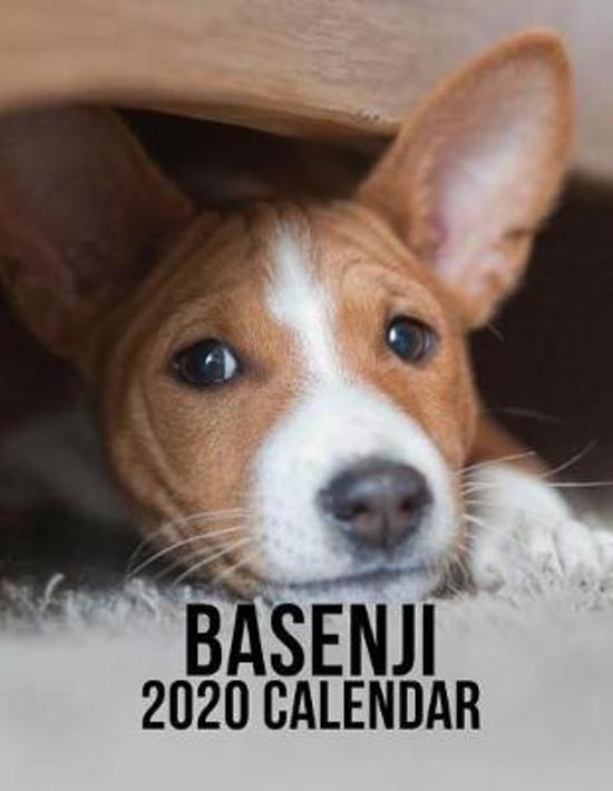 Basenji 2020 Calendar