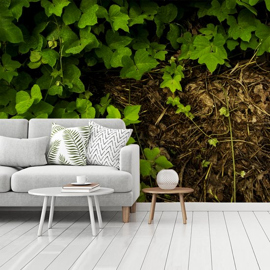 Fotobehang vinyl - Fel groene kudzu bij een droge ondergrond breedte 350 cm x hoogte 260 cm - Foto print op behang (in 7 formaten beschikbaar)