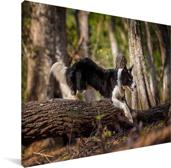Een zwart-witte Border Collie die over een stam springt Canvas 80x60 cm - Foto print op Canvas schilderij (Wanddecoratie woonkamer / slaapkamer) / Huisdieren Canvas Schilderijen