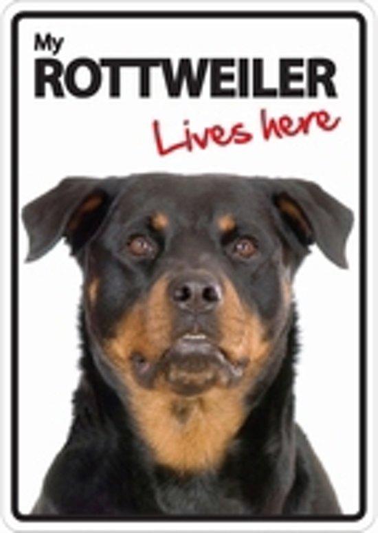 Rottweiler lives here
