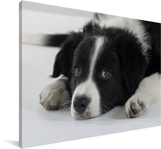 Border Collie hond liggend op de vloer Canvas 180x120 cm - Foto print op Canvas schilderij (Wanddecoratie woonkamer / slaapkamer) / Huisdieren Canvas Schilderijen XXL / Groot formaat!