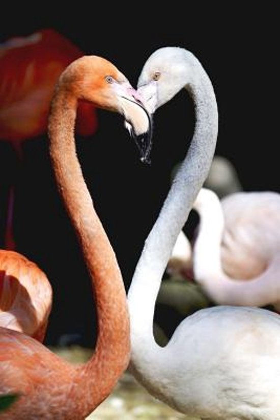 Two Cool Flamingos Strike a Pose Journal