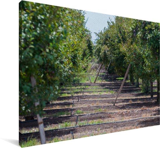Mooie pruimenboomgaard op een zonovergoten dag Canvas 120x80 cm - Foto print op Canvas schilderij (Wanddecoratie woonkamer / slaapkamer)