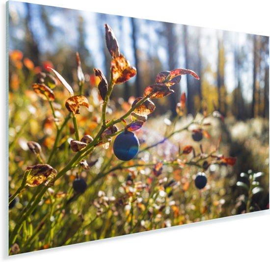 Blauwe bessen in een bos Plexiglas 90x60 cm - Foto print op Glas (Plexiglas wanddecoratie)