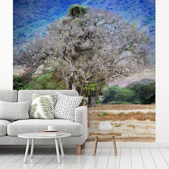 Fotobehang vinyl - Een mooie foto van een baobabboom die in de Ngorongoro krater te vinden is breedte 300 cm x hoogte 300 cm - Foto print op behang (in 7 formaten beschikbaar)
