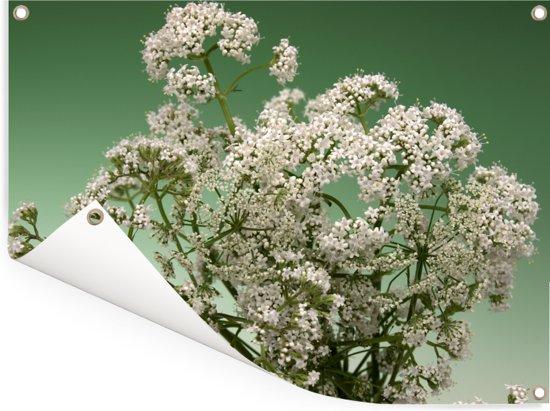 Een sierlijke bloeiende valeriaan Tuinposter 80x60 cm - Tuindoek / Buitencanvas / Schilderijen voor buiten (tuin decoratie)