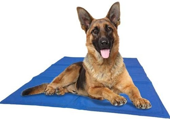 Koelmat Hond - XL - Blauw - 60 x 100 cm