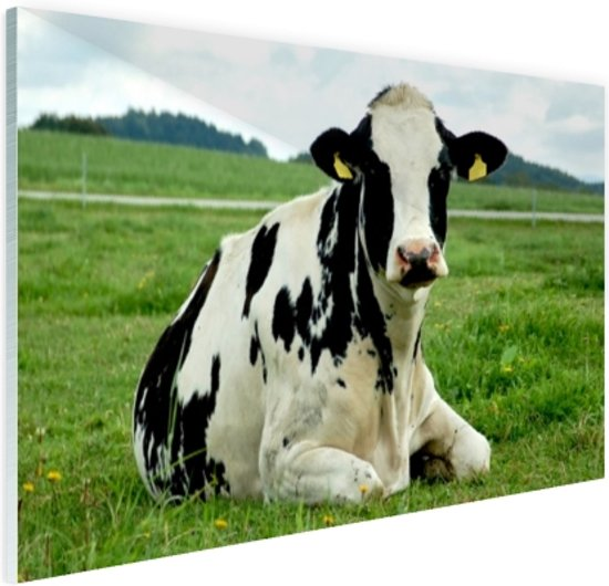 Rustende Holsteinkoe Glas 60x40 cm - Foto print op Glas (Plexiglas wanddecoratie)