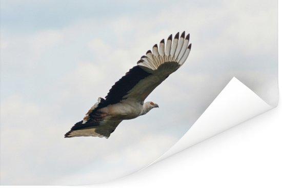 Vliegende gierarend in mooie lucht Poster 120x80 cm - Foto print op Poster (wanddecoratie woonkamer / slaapkamer)