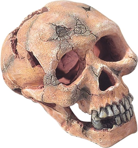 Ebi aquarium decoratie schedel aap 15 cm for Decoratie schedel