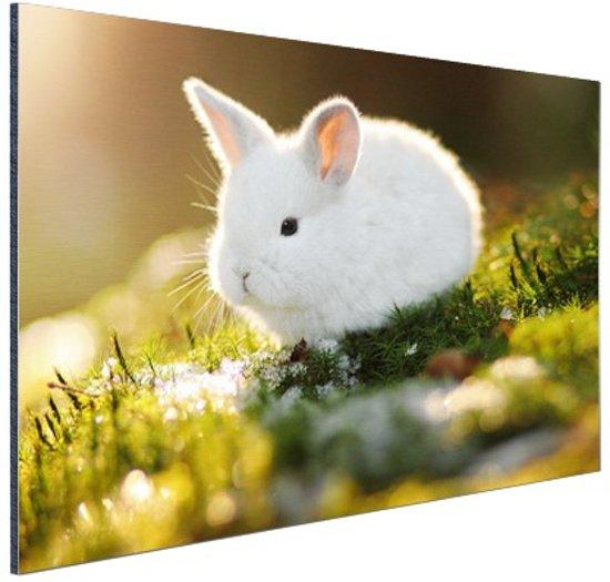 Baby konijn op mos Aluminium 120x80 cm - Foto print op Aluminium (metaal wanddecoratie)