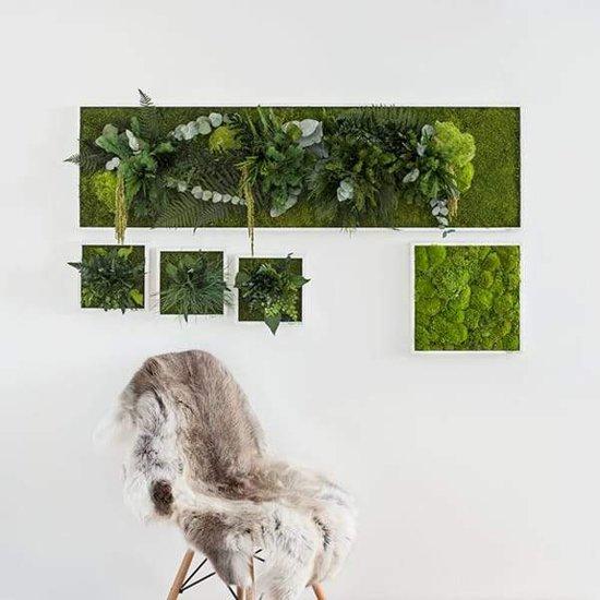Verticale tuin - Pole moss - 35 x 35 cm