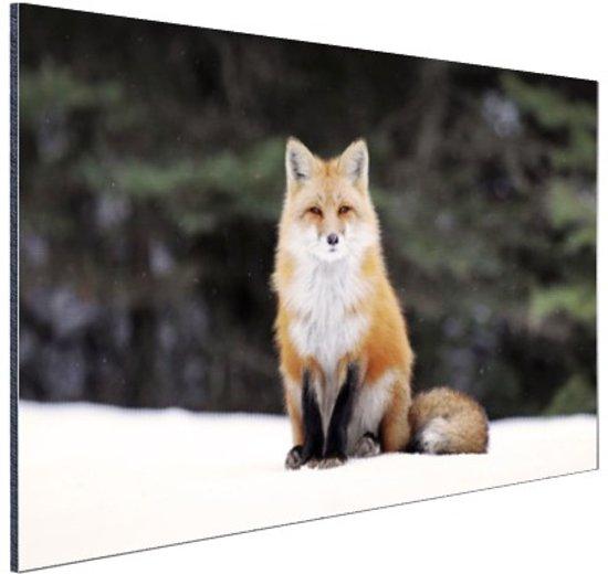Rode vos in de sneeuw Aluminium 60x40 cm - Foto print op Aluminium (metaal wanddecoratie)