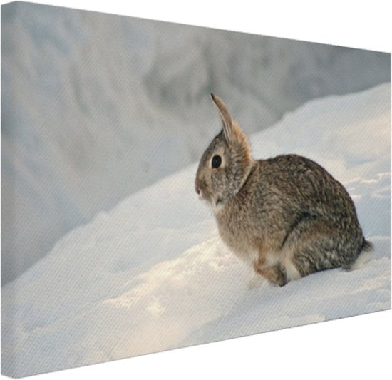 FotoCadeau.nl - Wild konijn in de sneeuw Canvas 30x20 cm - Foto print op Canvas schilderij (Wanddecoratie)