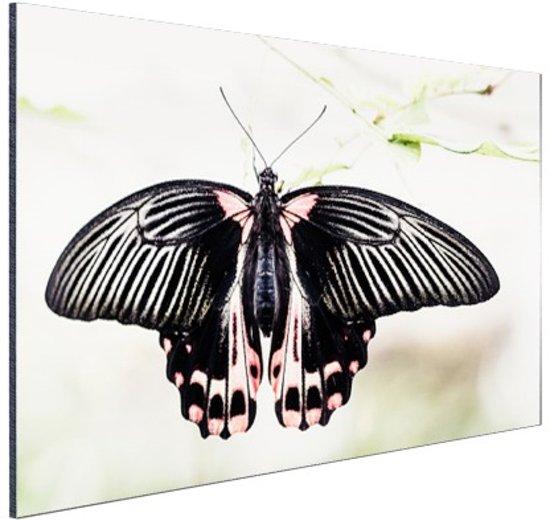 Zwart-roze vlinder Aluminium 90x60 cm - Foto print op Aluminium (metaal wanddecoratie)