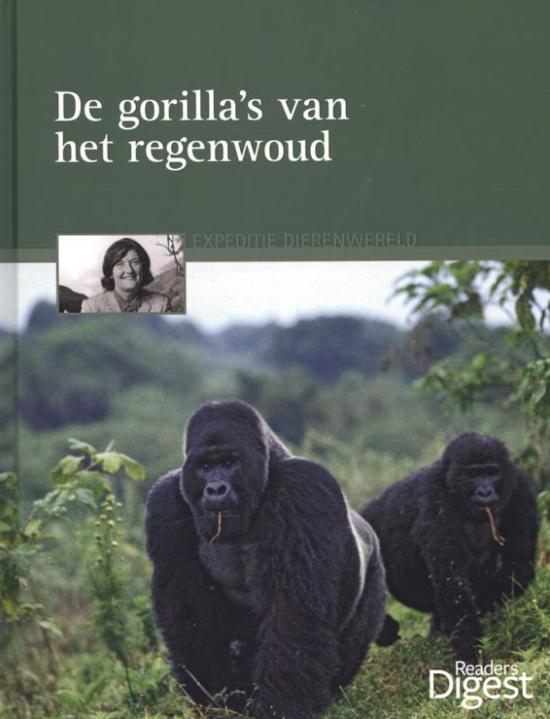 De gorilla's van het regenwoud