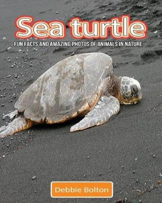 Sea Turtle: Fun Facts and Amazing Photos of Animals in Nature