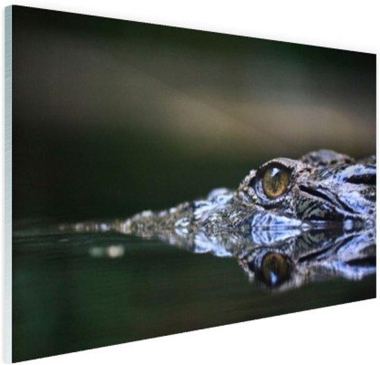 Oog van krokodil Glas 120x80 cm - Foto print op Glas (Plexiglas wanddecoratie)