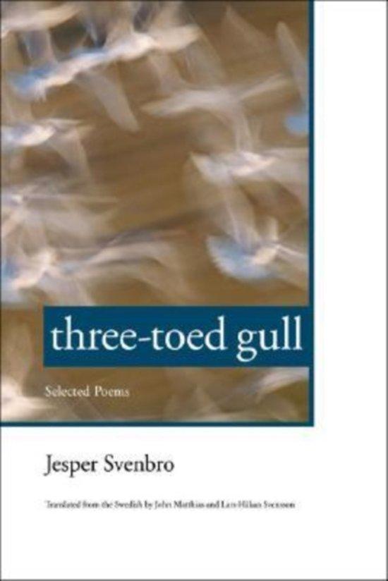 Three-toed Gull