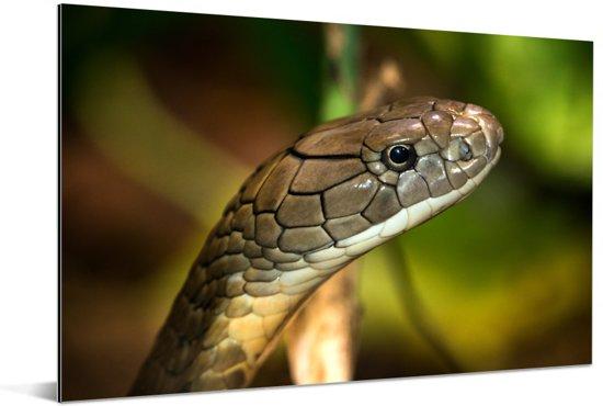 Cobra slang in een groene omgeving Aluminium 90x60 cm - Foto print op Aluminium (metaal wanddecoratie)