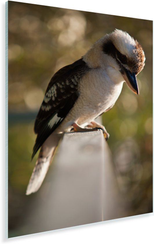 Een kookaburra die zit op een railing Plexiglas 80x120 cm - Foto print op Glas (Plexiglas wanddecoratie)