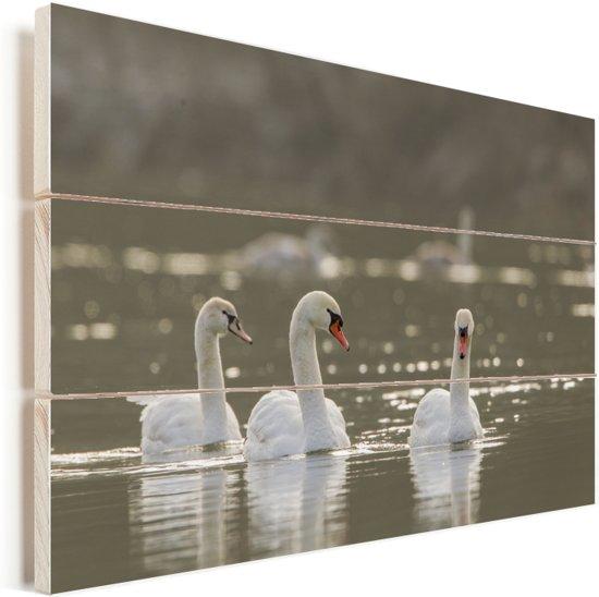 Kleine zwanen drijvend op een rivier Vurenhout met planken 120x80 cm - Foto print op Hout (Wanddecoratie)