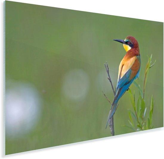 Een Bijeneter in de groene natuur Plexiglas 60x40 cm - Foto print op Glas (Plexiglas wanddecoratie)